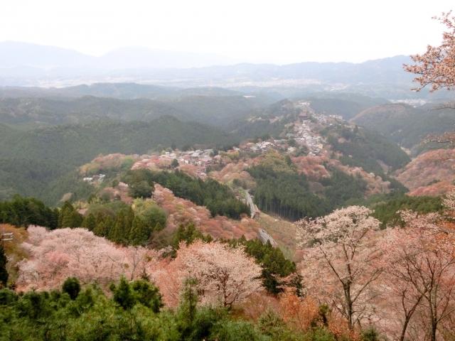 吉野の桜を上から観た
