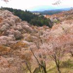 吉野の山の桜
