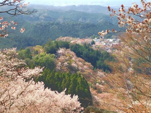 吉野の桜奥千本