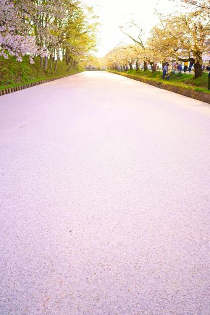 弘前桜祭り桜のカーペット