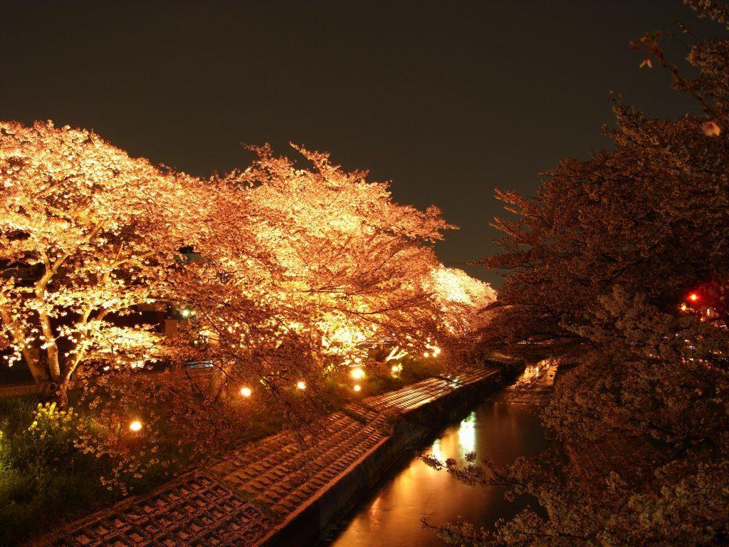 奈良県大和高田の夜桜の川面に映る景色