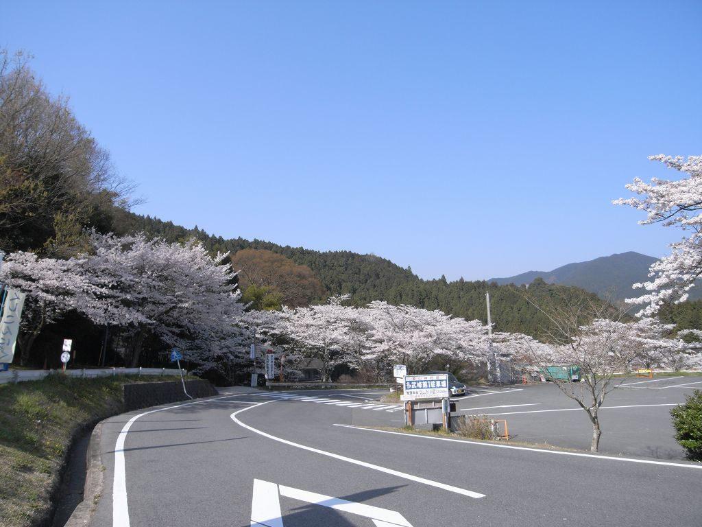奈良県談山神社の桜並木