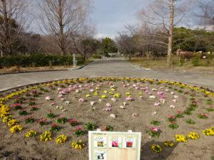 深北公園の花畑