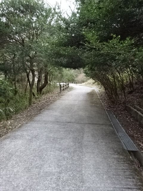 山麓公園の展望台までの道その2