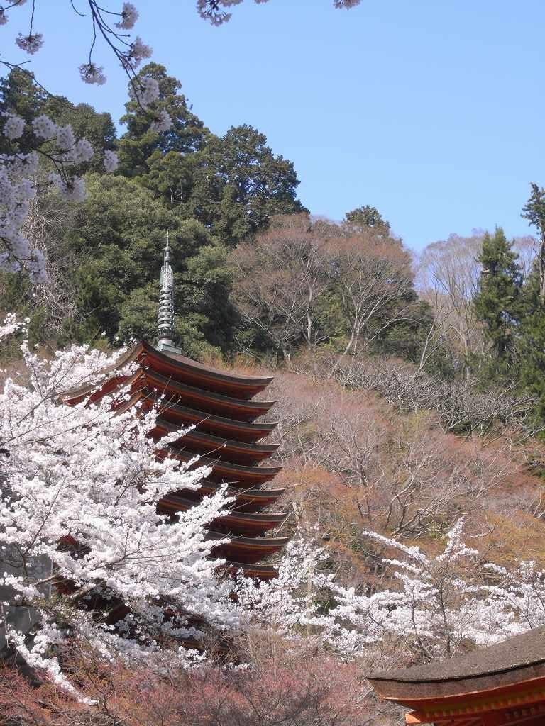 奈良県談山神社の桜と十三重塔