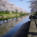 各務原桜祭り新境川堤の桜並木