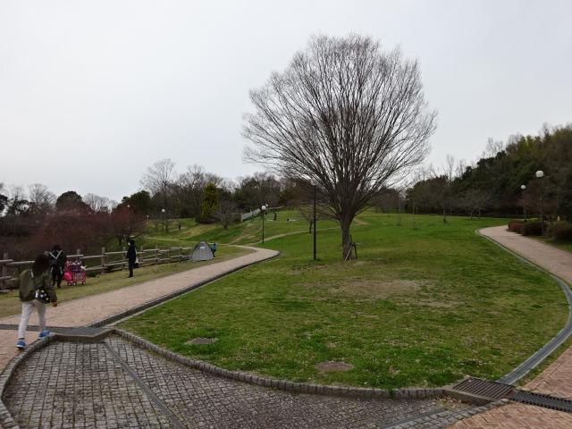 鴻ノ巣山運動公園の大芝生広場