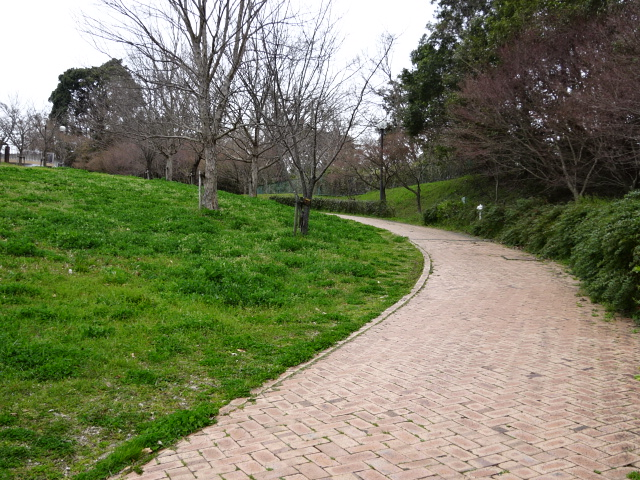 鴻ノ巣山運動公園の大芝生広場の坂道5