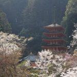奈良の長谷寺の春