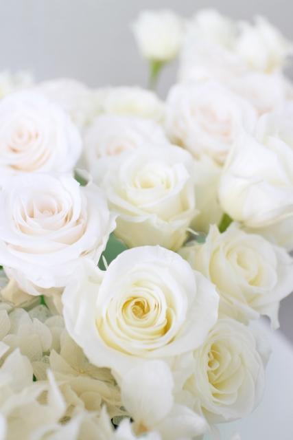父の日のプレゼントの白いバラの花