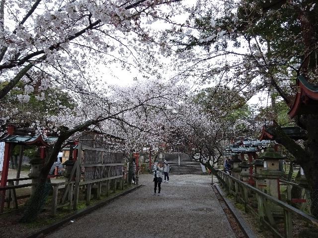 氷室神社の境内の道