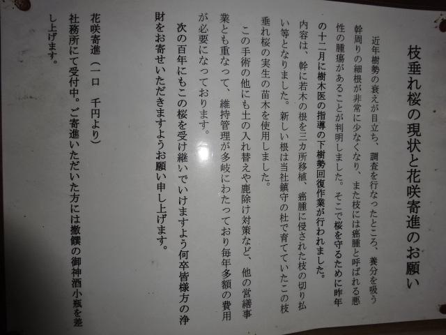 氷室神社のシダレザクラに関する貼り紙