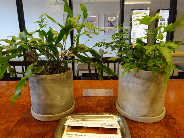 ブランチ松井山手の喫茶店の観葉植物