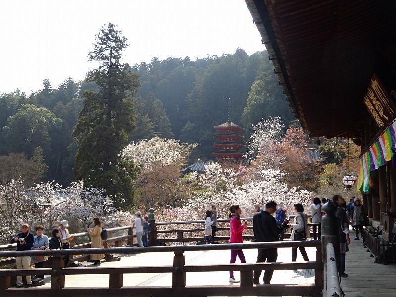 長谷寺本堂の南面の大殿堂