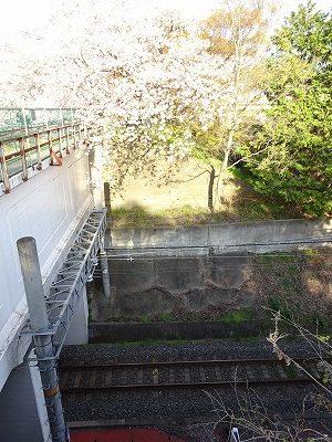 JRと井手の桜