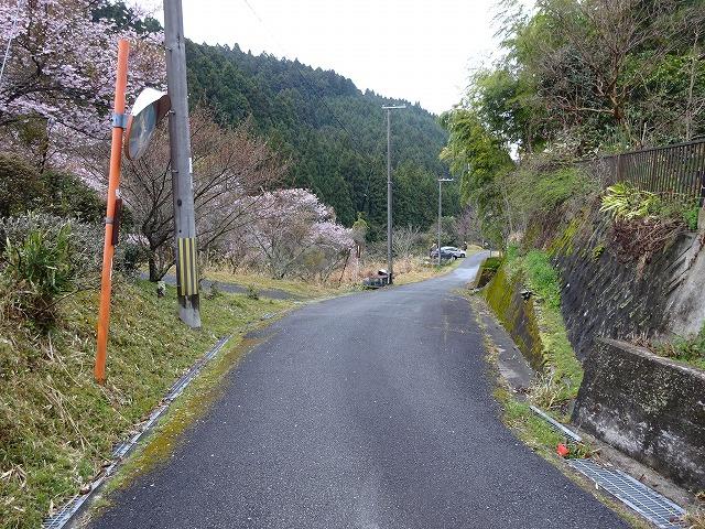 諸木野の桜へ行く坂道