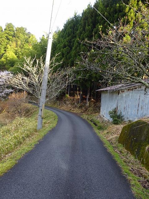 諸木野の桜への山道