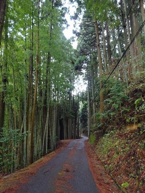 諸木野の桜への林道