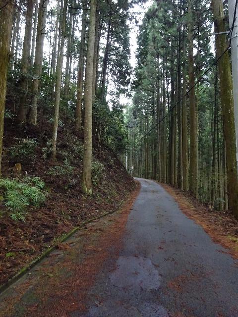 諸木野の林道