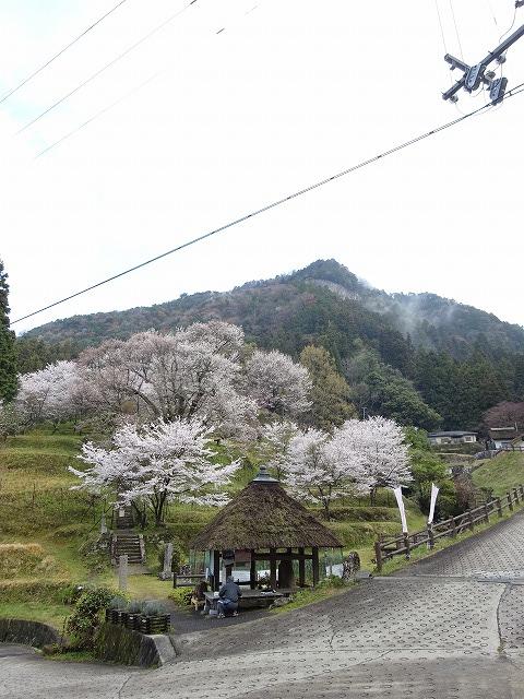 佛隆寺の千年桜と山の風景