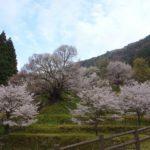佛隆寺の桜