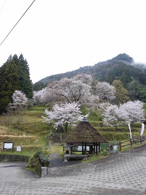 千年桜とのどかな風景