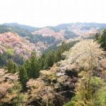 一目千本から観た桜
