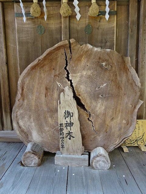 吉水神社御神木