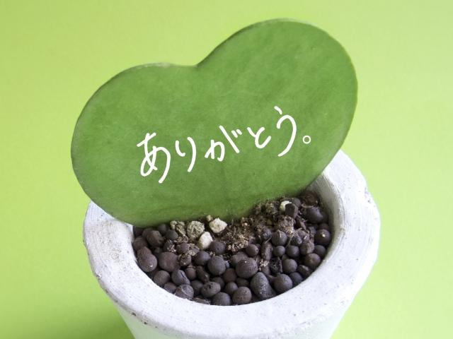 結婚記念日の感謝の言葉が書いてある植物