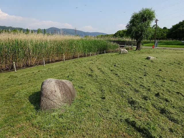 深北緑地残念石の景色