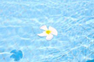 プールと花