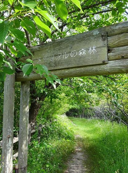 田辺公園のメモリアルの森林