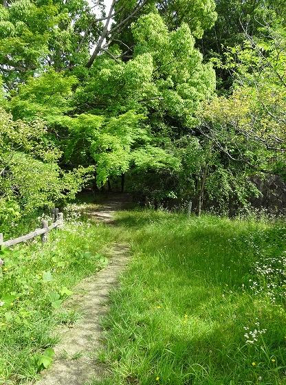 田辺公園のメモリアルの森林の奥