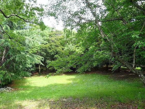 田辺公園のメモリアルの森林のさらに奥