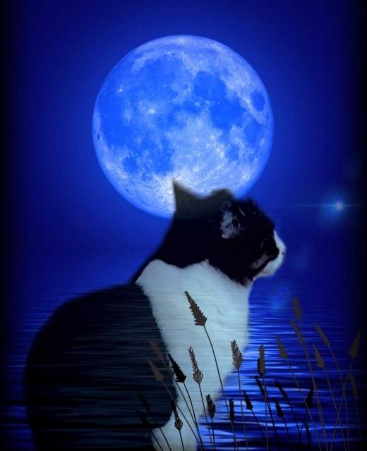 月見とネコ